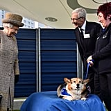 Queen Elizabeth II visits Battersea Dogs and Cats Home in 2015.