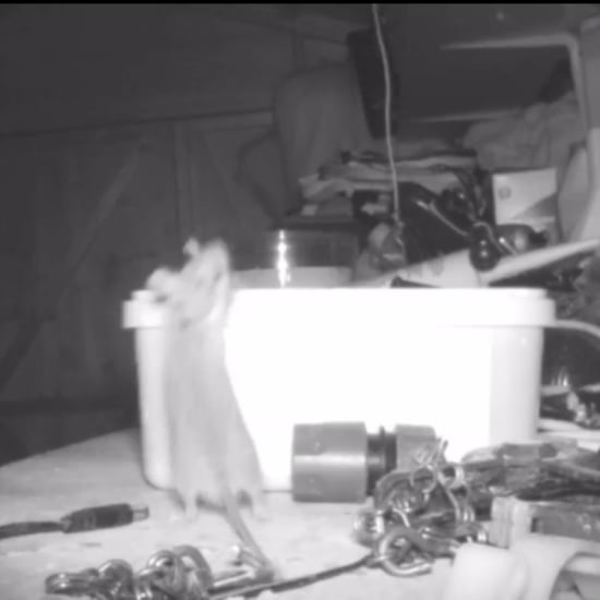Mouse Cleans Up Man's Garage