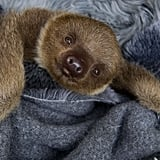 The Smile of a Sloth