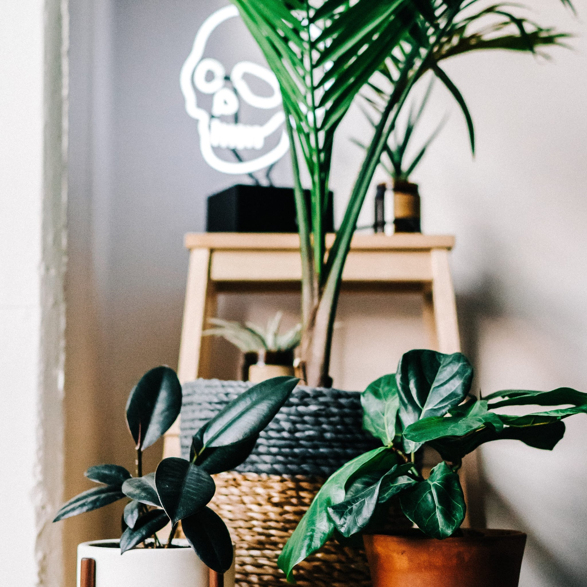 Best Houseplants For Air Quality | POPSUGAR Home on spices names, grass names, berries names, wildflowers names, veggies names, plants names, pets names, design names, garden names, cacti names, photography names, nuts names, furniture names, weather names, insects names, ornamental grasses names, herbs names, leaves names, lawn care names, pottery names,