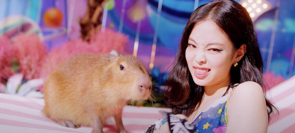 "What's the Animal in Blackpink's ""Ice Cream"" Video? Capybara"