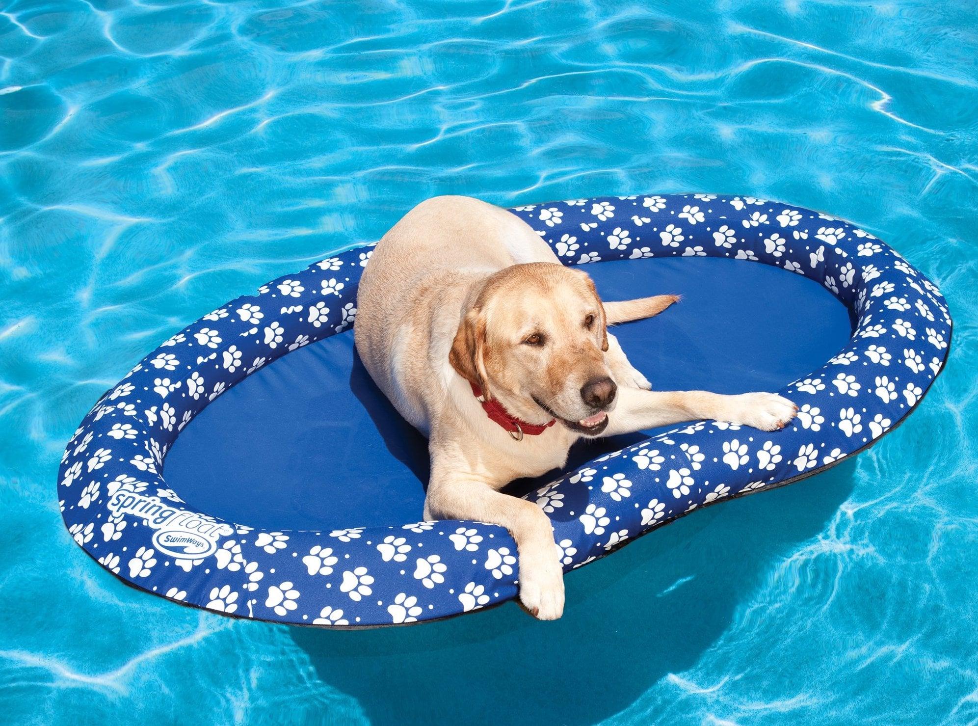 SwimWays Spring Float Paddle Paws Dog Pool Float | 33 Hot ...