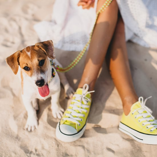 Bicoastal Dog Trends