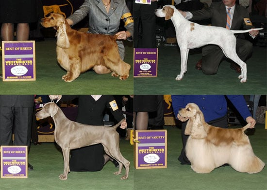 2008 Westminster Winners: Sporting Group