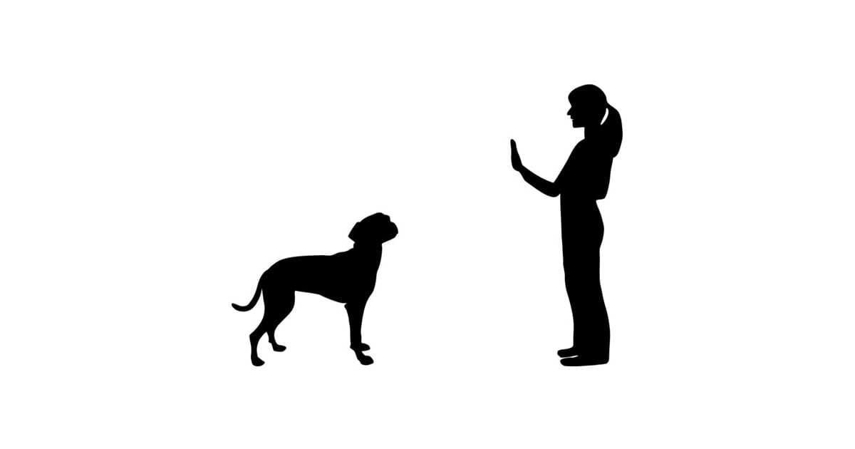 Stay Essential Hand Signals For Dogs Popsugar Pets Photo 5