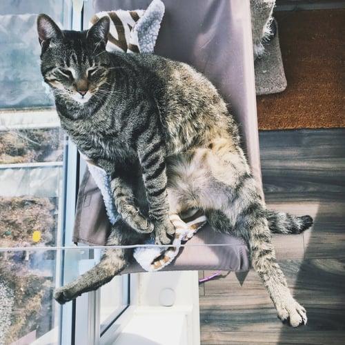 My cat, Oliver.