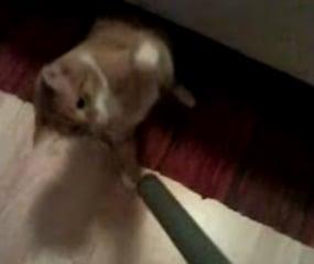 Cat Versus Vacuum Cleaner