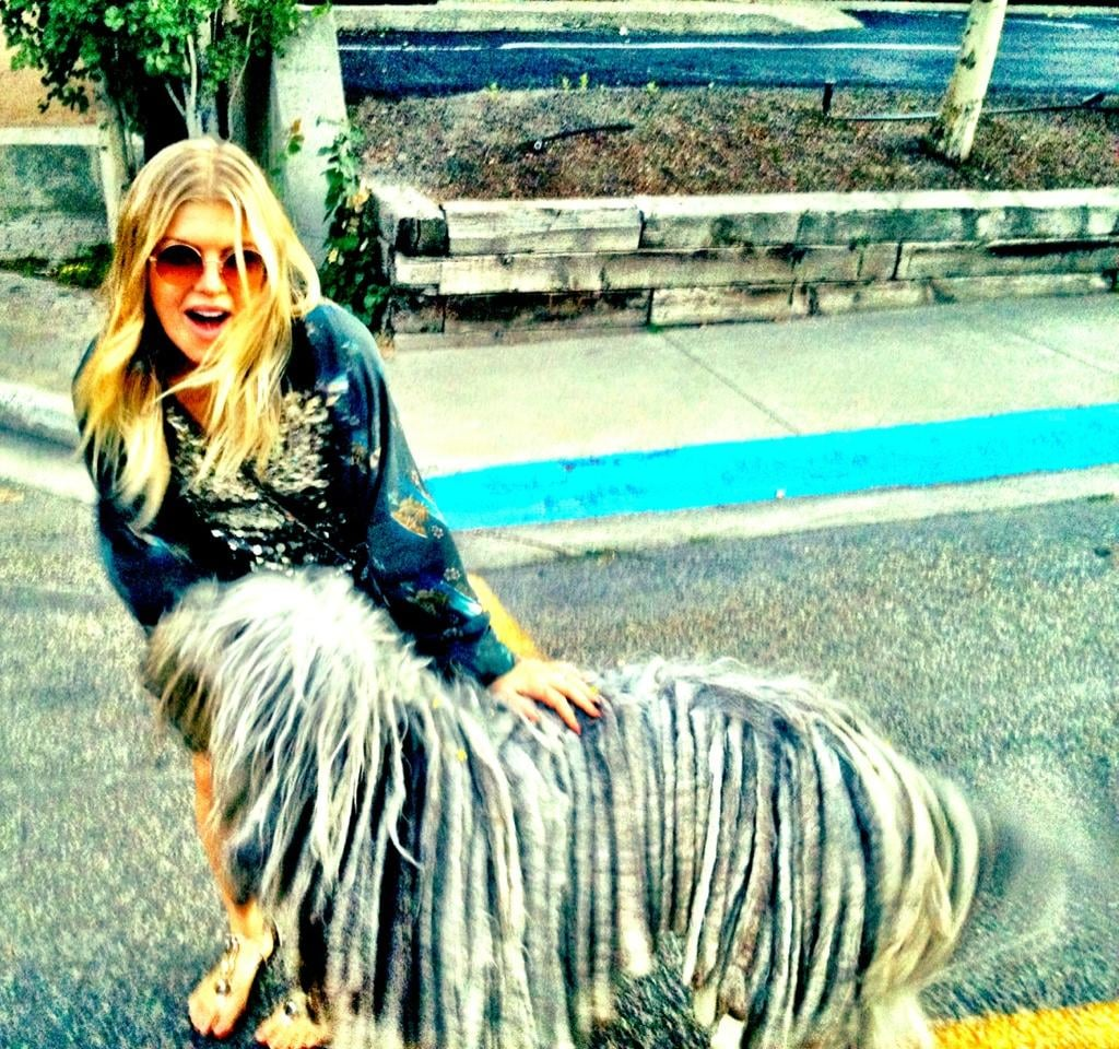 "Fergie palled around with the ""dread dog."" Source: Twitter user Fergie"