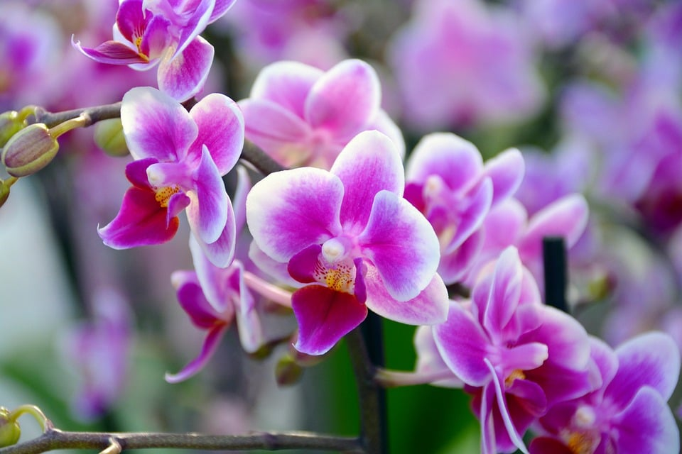 Singapore Names Orchid After UAE Sheikha | POPSUGAR Middle ...