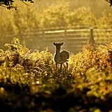 A deer was spotted among the changing leaves at the National Trust's Dunham Massey Park in the UK.