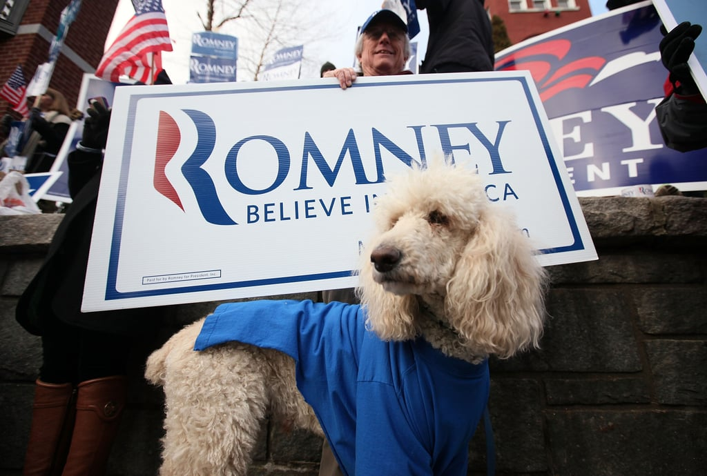 Outside the Meet the Press Facebook debate in January, a Poodle wears his support on his sleeve.