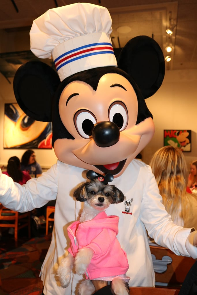 It obviously isn't Spring break in Orlando unless you visit the Mickey Mouse and his friends, of course!