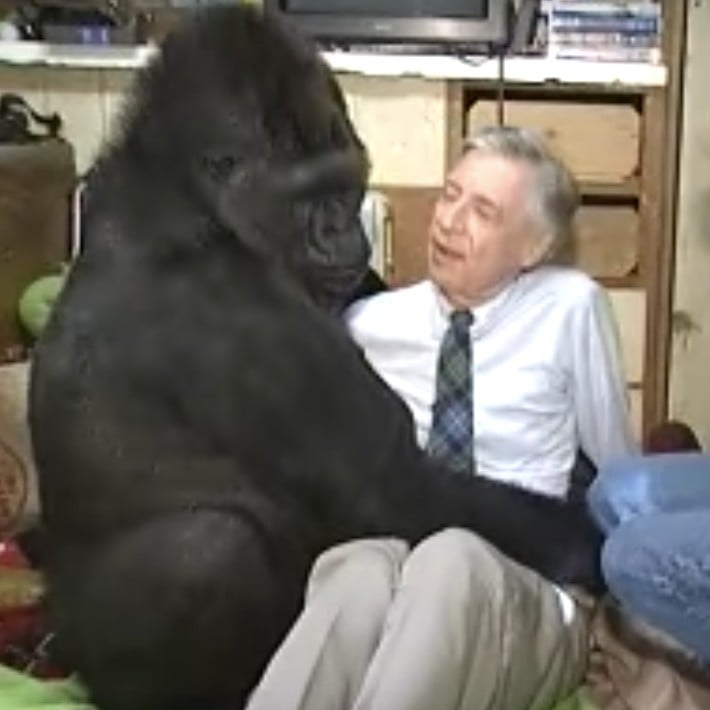 Koko The Gorilla Meeting Mr Rogers Videos Popsugar News