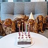 Celebrate your pet's birthday.