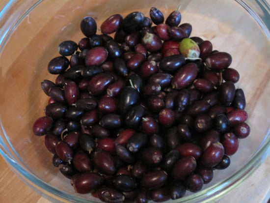 Easy Recipe for Homemade Olives 2010-04-24 16:00:23