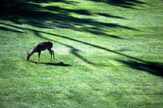 How-To: Keeping Deer Out of Your Garden