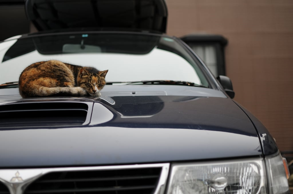 What It's Like to Take Your Cat in the Car