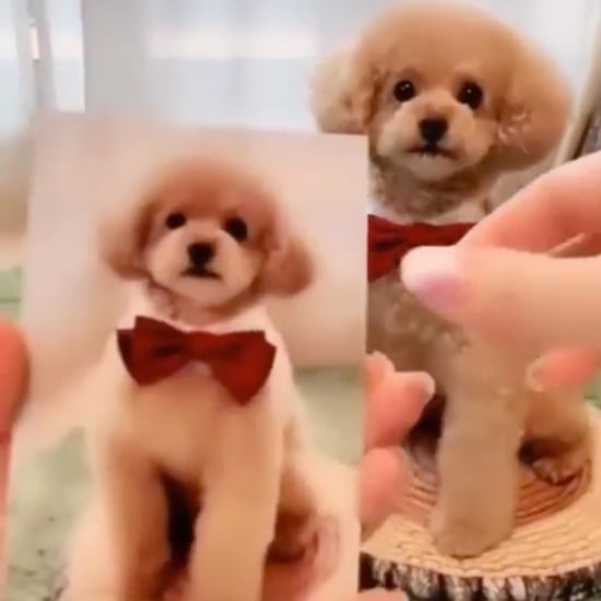 Dog Does Tricks by Copying Photos of Himself Video