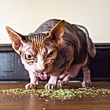Cats on Catnip Photo Series