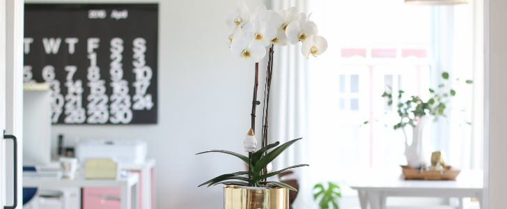 Everything You Need to Know About Caring For Your Orchid Plant