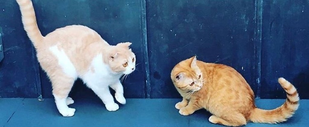 Ed Sheeran's Cat Instagram