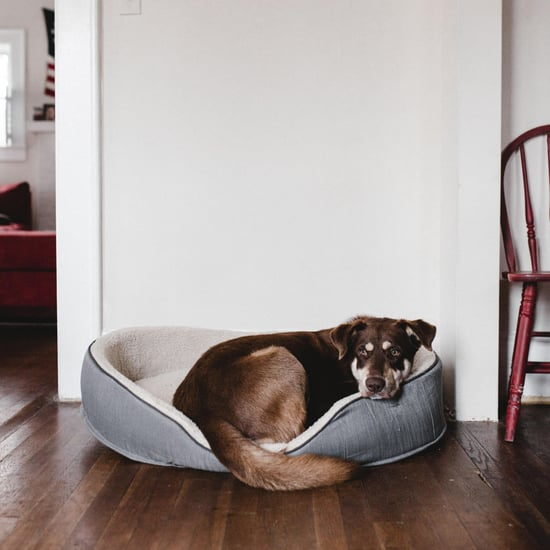 Home Styling Tips for Living With Pets