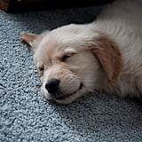 One tuckered-out pup. Source: Flickr user qJake