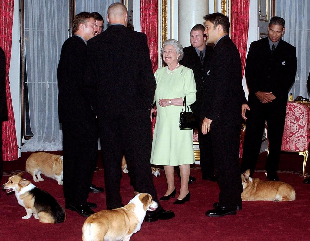 Pictures of Queen Elizabeth's Corgis