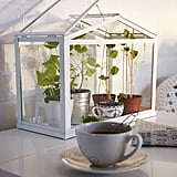 Ikea Greenhouse ($42)