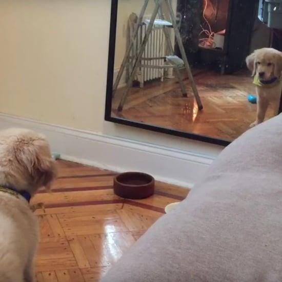 جرو يرى انعكاسه في المرآة
