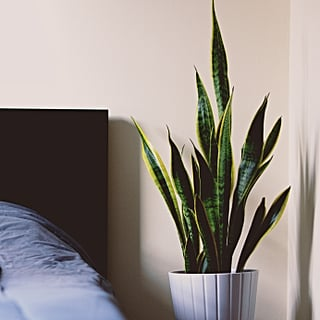 Plants That Help You Sleep on Amazon