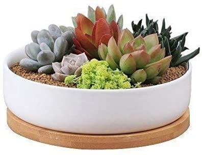 Biwen 6.3-Inch Round Ceramic White Succulent Planter