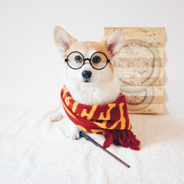 harry potter dog outfits popsugar australia tech