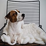 Pets love these too (though you'll want to be sure they don't destroy them!). Pet mats are 24 inch by 24 inch.