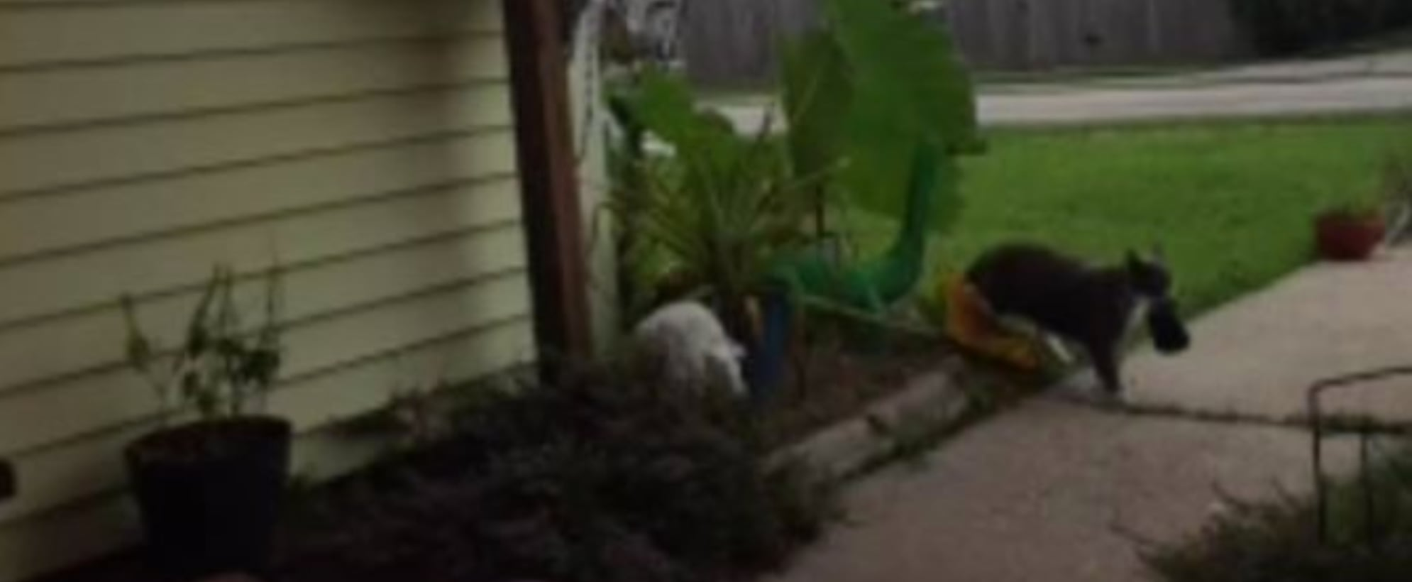 Woman Realizes Her Cat Steals the Neighbor's Laundry