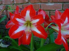 Pretty Things Can Harm You: Toxic Houseplants