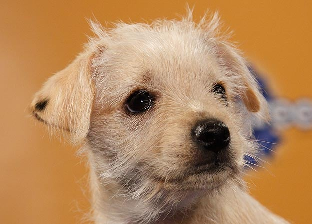 We may have found a winner in Chihuahua/terrier mix Eurika. Source: Animal Planet