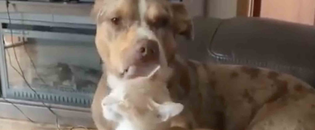 Funny Video of a Dog Giving a Cat a Bath