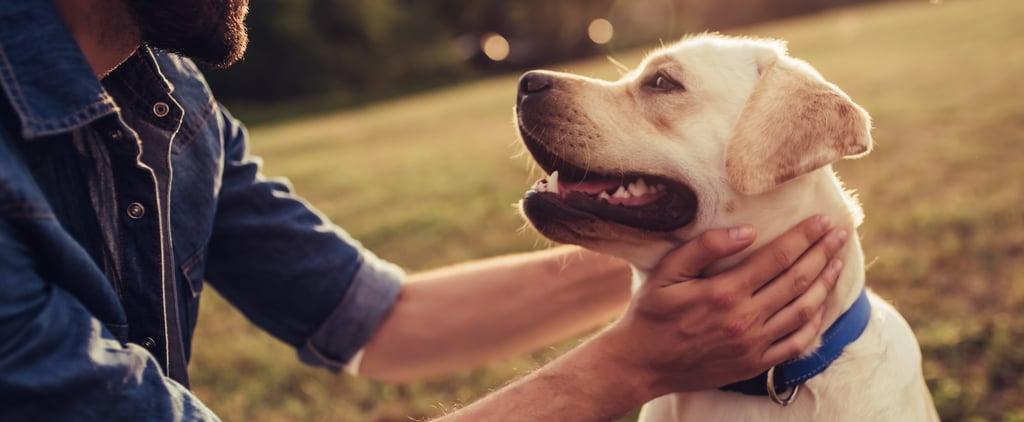 كيف يمكن للحيوانات الأليفة أن تحافظ على صحّة الناس