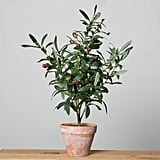 Potted Olive Topiary ($48)