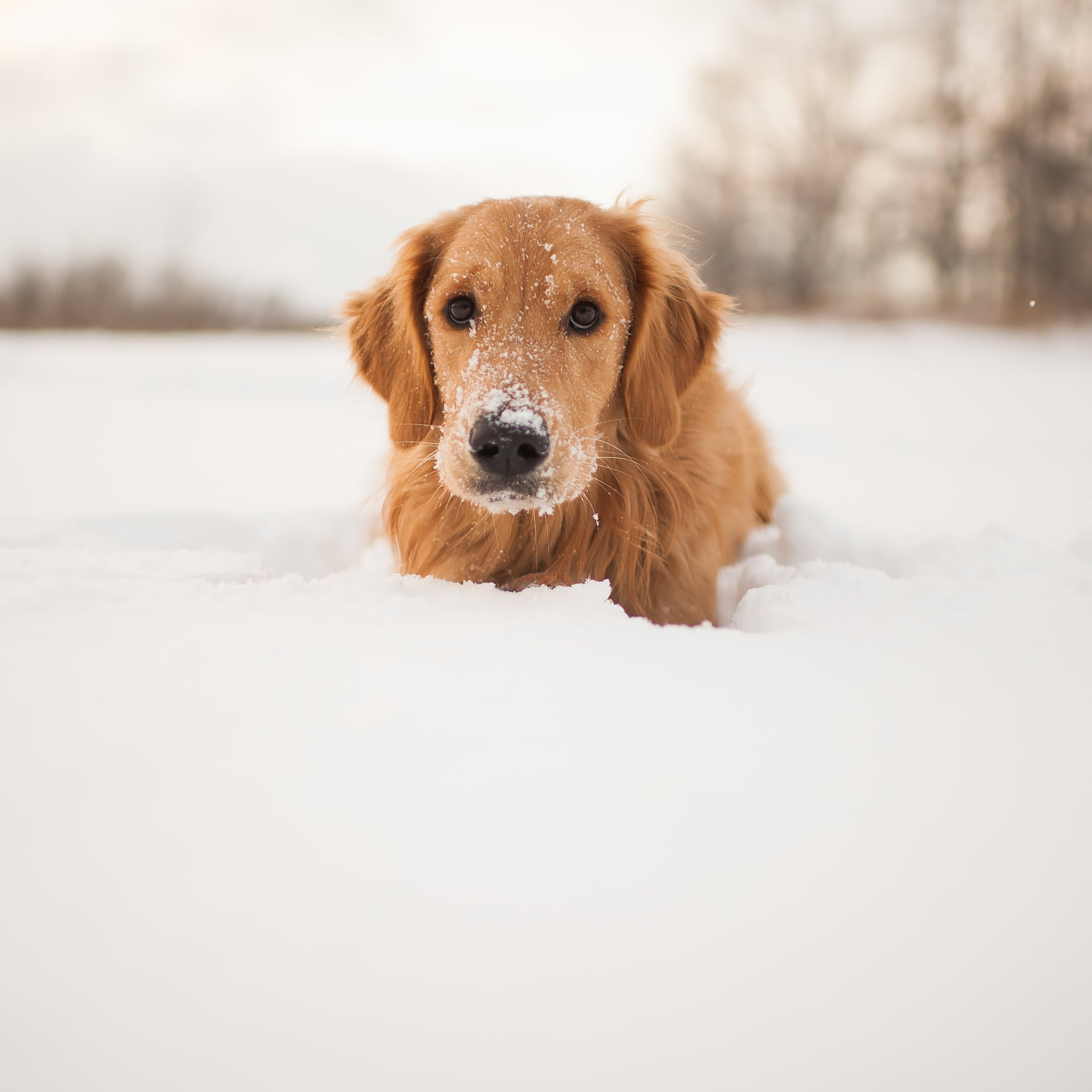 Cute Photos Of Dogs In The Winter Popsugar Pets