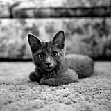 Most Popular Names For Female Cats