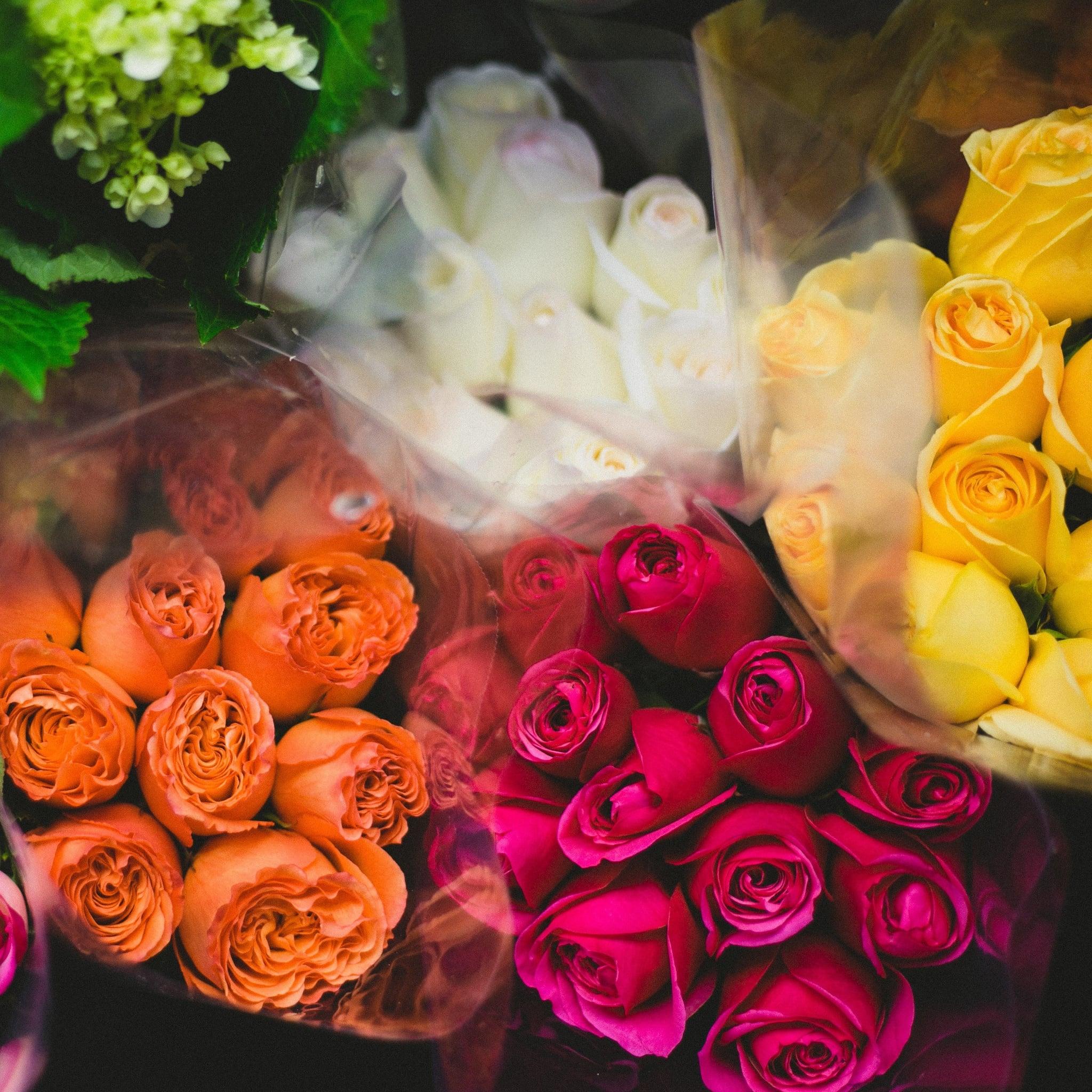 rose color meanings popsugar love sex rose color meanings popsugar love sex