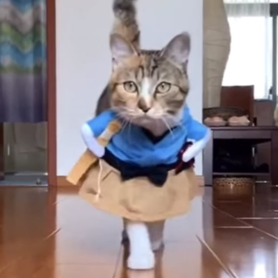 "Cat Wearing Different Costumes on a ""Catwalk"" 