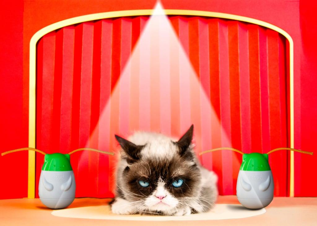 Grumpy Cat's Pet Peeves Interview