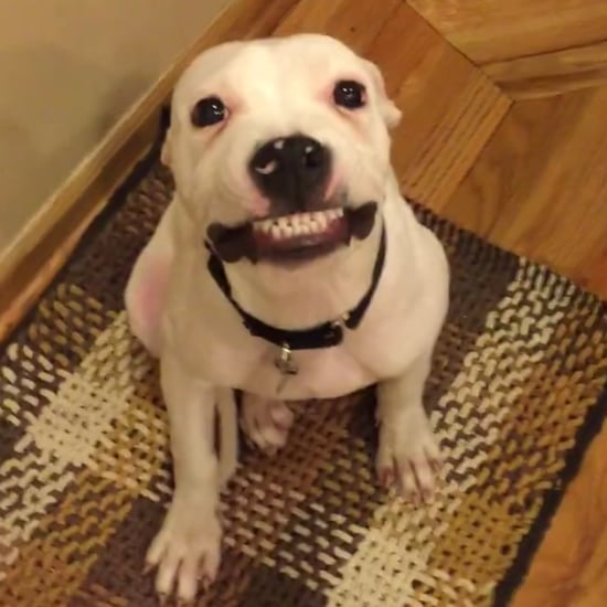 Dog Smiling For Picture | Video