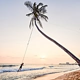 Palm Tree Swings