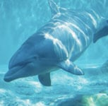 Do You Know the Difference Between Dolphins and Porpoises?
