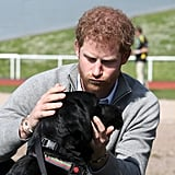 Harry petted a dog during the UK team trials for the Invictus Games Toronto in Bath, England, in April.