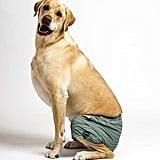 Kove Mate Dog Swim Trunks